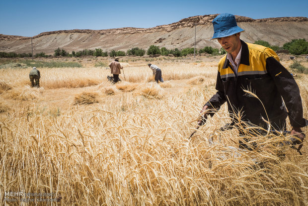 Iran, Russia, Kazakhstan reach agreement on grain trade