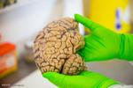 برگزاری ۲ کارگاه بین المللی توسط آزمایشگاه نقشه برداری مغز