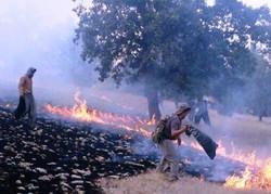 نابودی ۷۰ هکتار از منابع طبیعی استان در آتش سوزی های اخیر