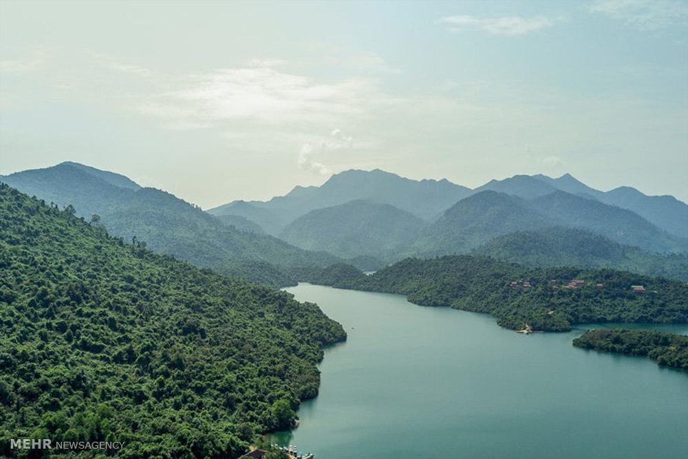 جلوگیری از نابودی جنگل ها در ویتنام