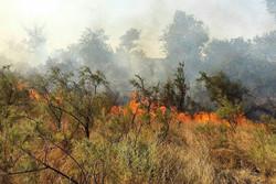 آتش سوزی جنگل های ارس