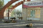 مرگ ۶ نفر بر اثر «هاری» در منطقه سیستان/آرامشی که قربانی می شود
