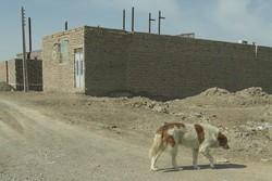 سگ های ولگرد در زابل