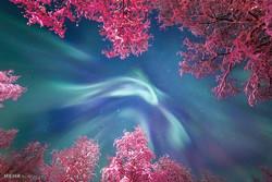 اعتدال بهاری در آینه علم نجوم/ چرا نوروز امسال یک روز بعد از سال تحویل است