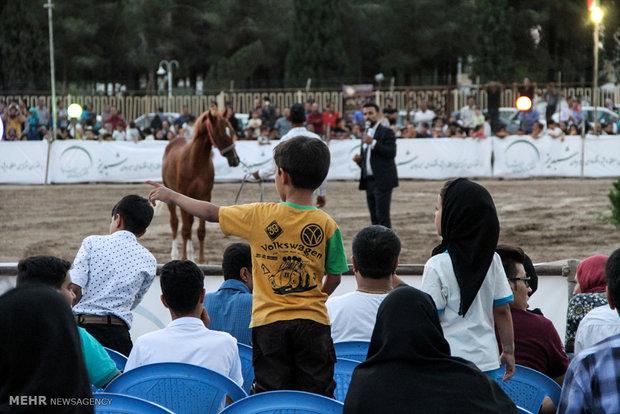 Native horse festival in Iranian Plateau