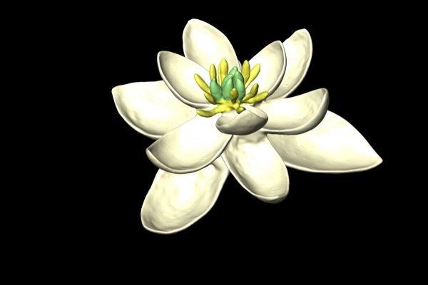 گیاه ۱۴۰ میلیون ساله جد تمام گل های جهان