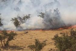 آتش سوزی جنگل های سرپلذهاب