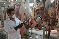 کشتار ۶۶ هزار راس دام سبک و سنگین در کشتارگاه های استان کرمانشاه