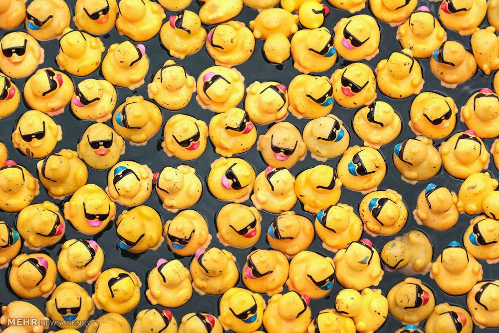 اردک های پلاستیکی در رودخانه شیکاگو