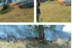آتش بیاری سودجویان در ذخیرهگاه زیست کره/ زیستمندان کباب میشوند
