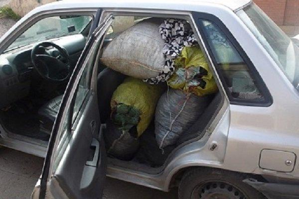 قاچاقچیان زغال خودروی منابع طبیعی فارس را به گلوله بستند