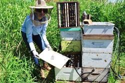 تأثیر منفی گرما برتولید عسل/تمهیدات ویژه در زنبورستان ها اجرا شود