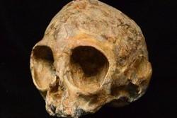 کشف جمجمه بچه میمون ۱۳ میلیون ساله