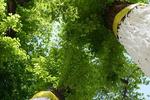 خلق آثار بدیع هنری بر روی درختان خشکیده شرق تهران