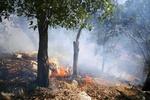 آتش سوزی در منطقه مشجر «ژاو مرگ» مهار شد