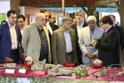 موزه تخصصی و گنجینه ذخایر ژنتیکی گلسنگ های ایران افتتاح شد
