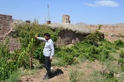 ۱.۵ میلیارد دلار به توسعه اشتغال روستائیان اختصاص یافت