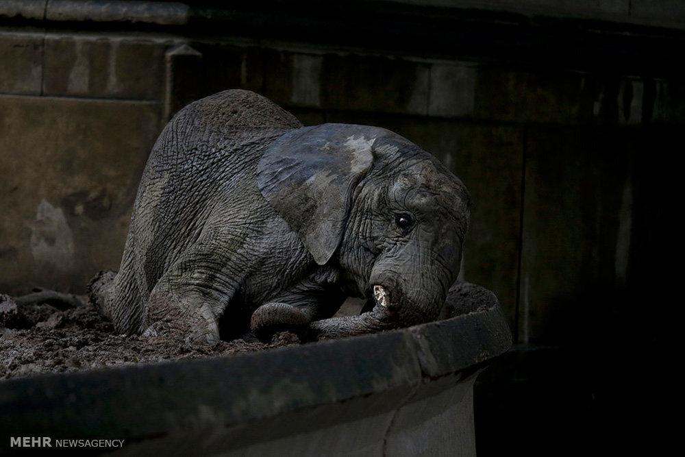 حیوانات باغ وحش تعطیل شده بوینس آیرس