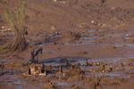 روان شدن گِل در سیرالئون صدها نفر را مدفون کرد/۳۰۰ جسد کشف شد