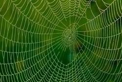 لباس ضدگلوله از جنس تار عنکبوت ساخته می شود