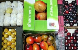 به محصولات قاچاق رحم نکنید/عرضه سموم کشاورزی فقط با نسخه