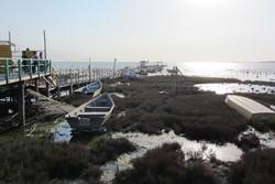 جزییات مطالعات اضطراری نجات خلیج گرگان