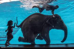 دنیای فیل ها
