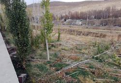 درختکاری حاشیه رودخانه خشک شیراز