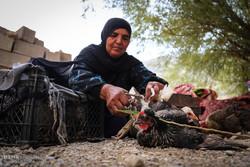 """الحياة تستمر رغم الخسائر التي خلفها السيل في محافظة """"فارس"""""""
