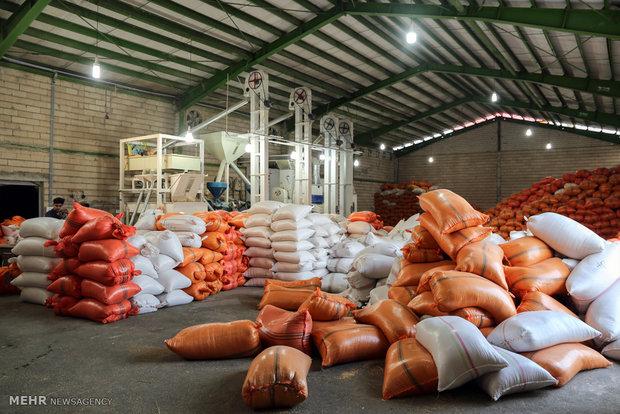 ۷۰ کانتینر برنج احتکاری در بندرعباس کشف شد