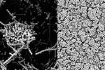 یک آنتی بیوتیک قوی در شیر مادر کشف شد