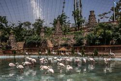 تخفیف ۷۵ درصدی بازدید دانش آموزان از باغ پرندگان
