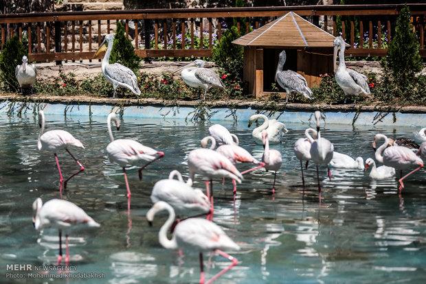 باغ پرندگان قم تا پایان امسال تکمیل میشود