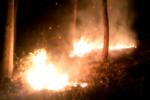 آتش به جان جنگلهای اسلام آبادغرب افتاد/ حریق در حال پیشروی است
