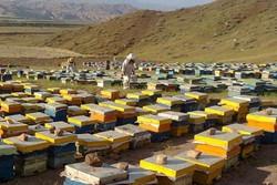 آمارگیری از پرورشدهندگان زنبور عسل