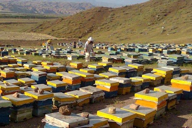 ۱۵ هزار کلونی زنبورعسل در دامغان وجود دارد