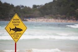 هوش مصنوعی شناگران را از خطر کوسه نجات می دهد