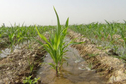 امکان تامین آب بخش زراعی از طریق سد رئیسعلی دلواری وجود ندارد