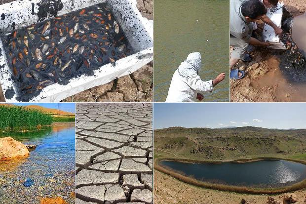 تراژدی تلخ ساکنان تالاب ۱۱ هزار ساله؛ هزاران ماهی تشنه جان دادند