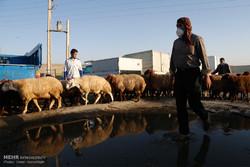 بازار خرید وفروش دام در آستانه عید قربان