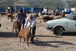 بازار خرید و فروش دام در آستانه عید قربان در شهرستان اهر