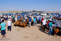 بازار خرید وفروش دام در آستانه عید قربان در آق قلا