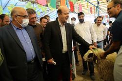 بازدید عضو شورای شهر تهران از محل عرضه دام