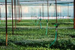 ایجاد شرکت بازرگانی توسط ۲۰ کشور آسیای میانه در دزفول