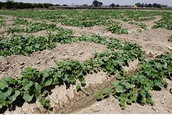 تامین نهاده های کشاورزان از سیاستهای سازمان تعاون روستایی است