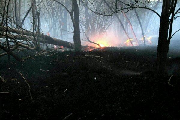 مهار آتش سوزی در جنگل ابر شاهرود/ درختان آسیب جدی ندیدند