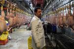 قیمت مرغ به زیر ۶ هزار تومان بازگشت/مذاکره با برخی کشورها برای صادرات