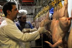 بازار آشفته نهادههای دامی/دولت قیمت مرغ را از حالا تدبیر کند