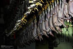 کشتارگاه صنعتی مرغ و طیور در ارومیه