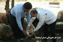 دامپزشکی کرمانشاه